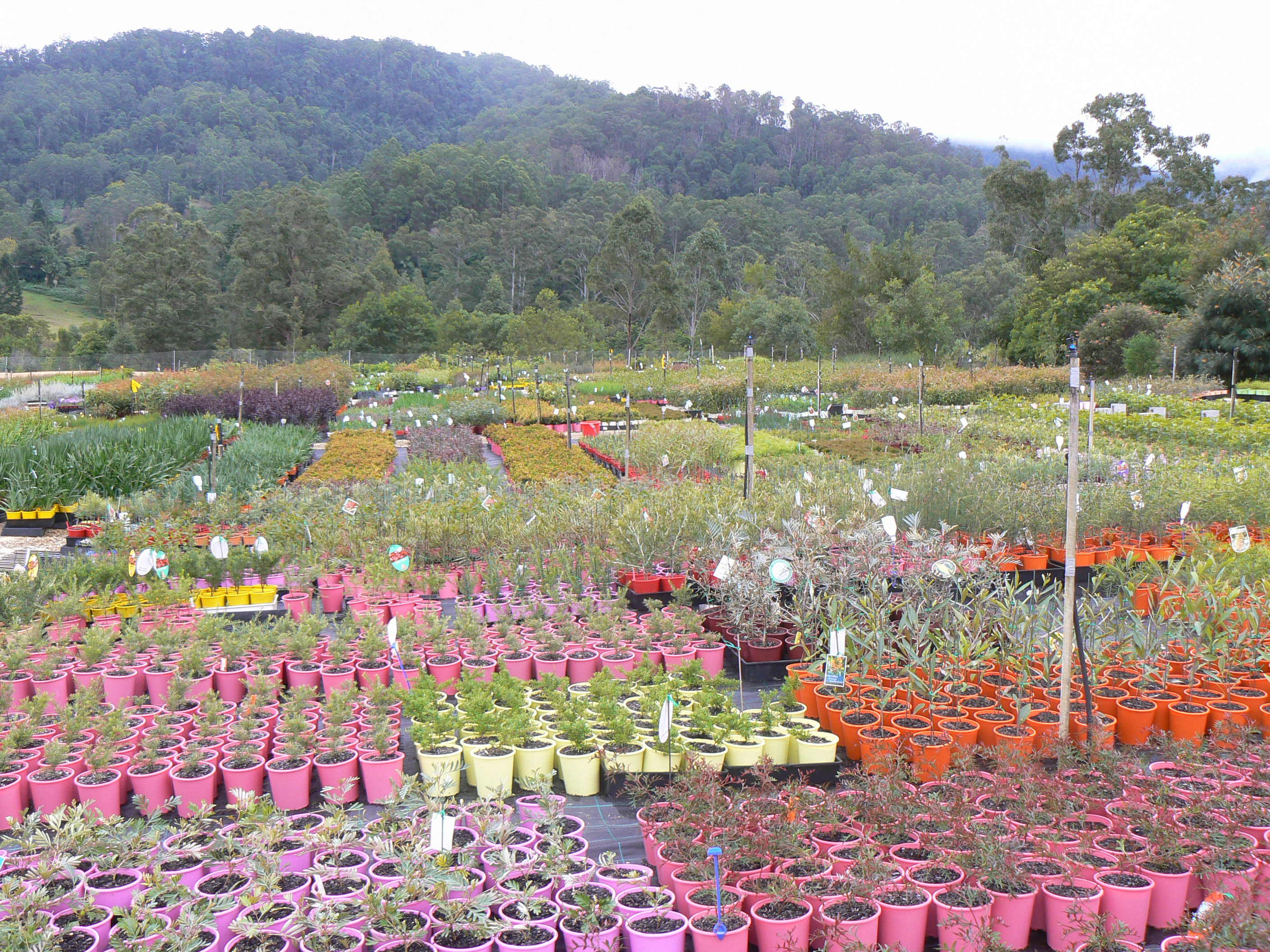 Gondwana wholesale native plant nursery australia for Plant nursery